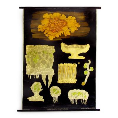 cartel-vintage-botanica-liquen-jung-koch-quentell