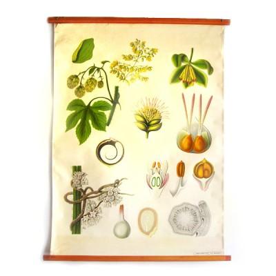 cartel-vintage-botanica-belgica